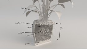 Inside Plant Rot System 3d