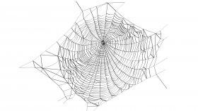 Spider Web 3D Model 1
