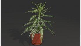 Houseplant Dracaena 3D Model 1