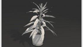 Dracaena Plant 3D Model 1