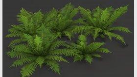 Garden Fern 3D Model