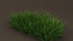Grass 3D Model 2